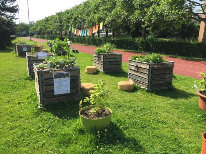Quartiergarten Ruopigen gedeiht